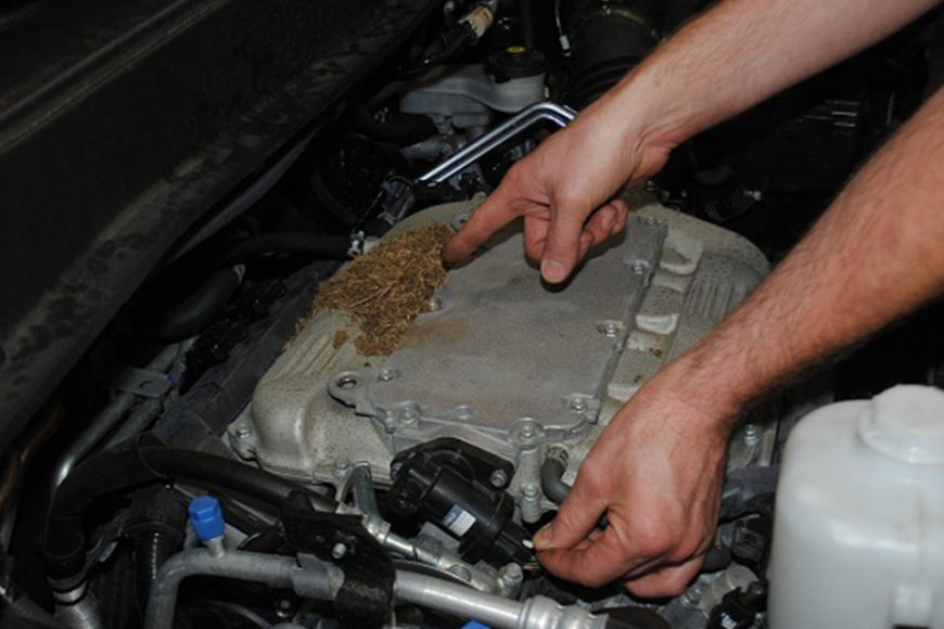 Don't let rodents destroy your car